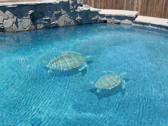 Sea Turtle Pool Tile Design
