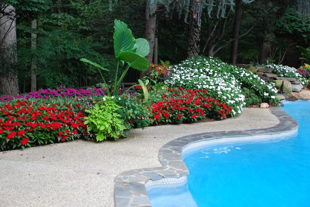 Swimming Pool tropical-pool