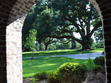 traditional porch Great Design Plant: Southern Live Oak Offers an Unbeatable Canopy (8 photos)