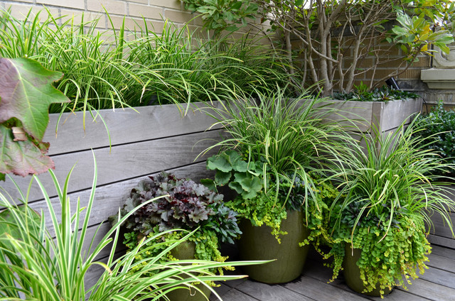 Create High Impact Container Gardens With Grasses