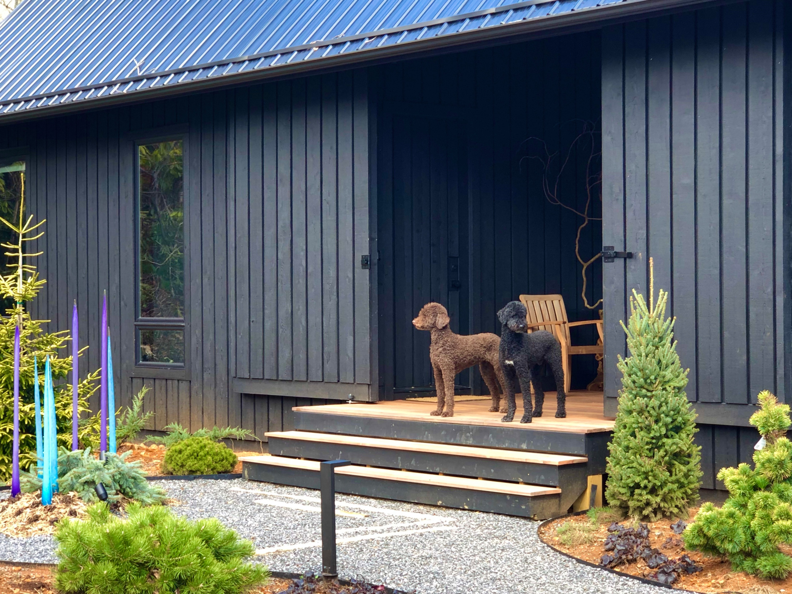 Dogtrot... with dogs!