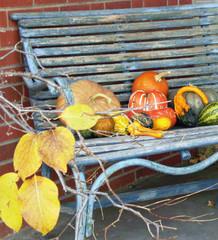 Rocky Mountain Gardener's November Checklist