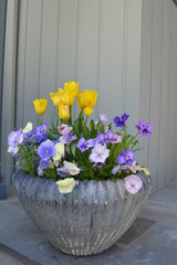 9 Beautiful Early Spring Container Gardens