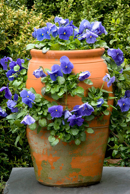 Strawberry Pot with Pansies
