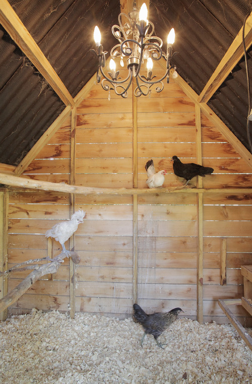 Here's a view inside a really large chicken coop with a vaulted roof design. The rich natural wood is supplemented with tree branches for the birds to roost on.