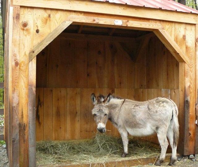 Run In Shed Custom Sizing For Mini Donkeys Rustic