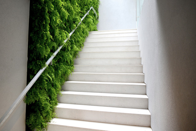 Plants On Walls Floating Ferns Modern Staircase