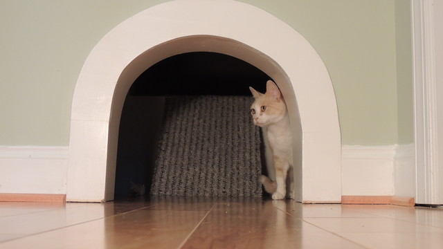 15 Design Friendly Places To Hide The Cat Litter Box
