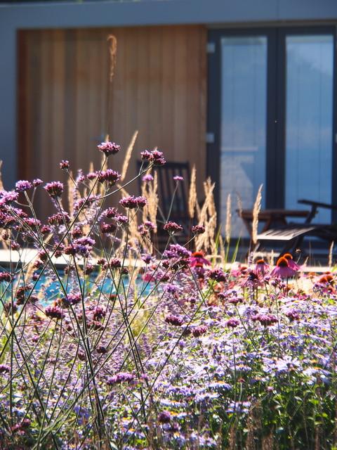 Richmond garden design contemporary swimming pool for Garden design richmond