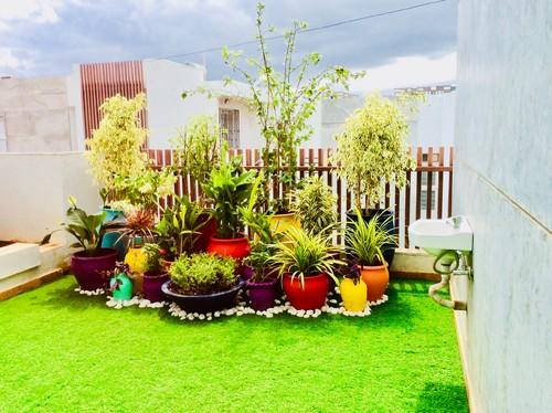 Top Seven Vastu Plants That Bring Good Luck