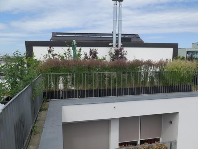 gro er dachgarten berlin mitte berlin von nelka bepflanzung dachterrasse balkon innenhof. Black Bedroom Furniture Sets. Home Design Ideas