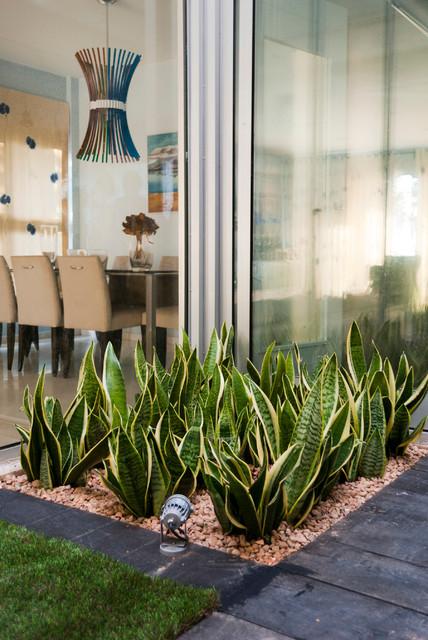Terrario para tortugas en patio interior costero for Como hacer un jardin interior en casa