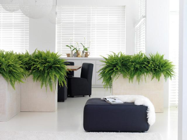 Raumteiler Pflanzkübel in creme aus Polystone - Modern ...